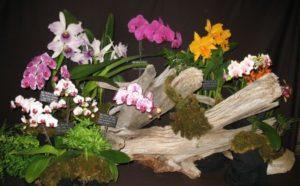 Central Ontario Orchid Society (COOS) -Annual Show & Sale @ Cambridge Hespeler Arena,    Cambridge   Ontario   Canada