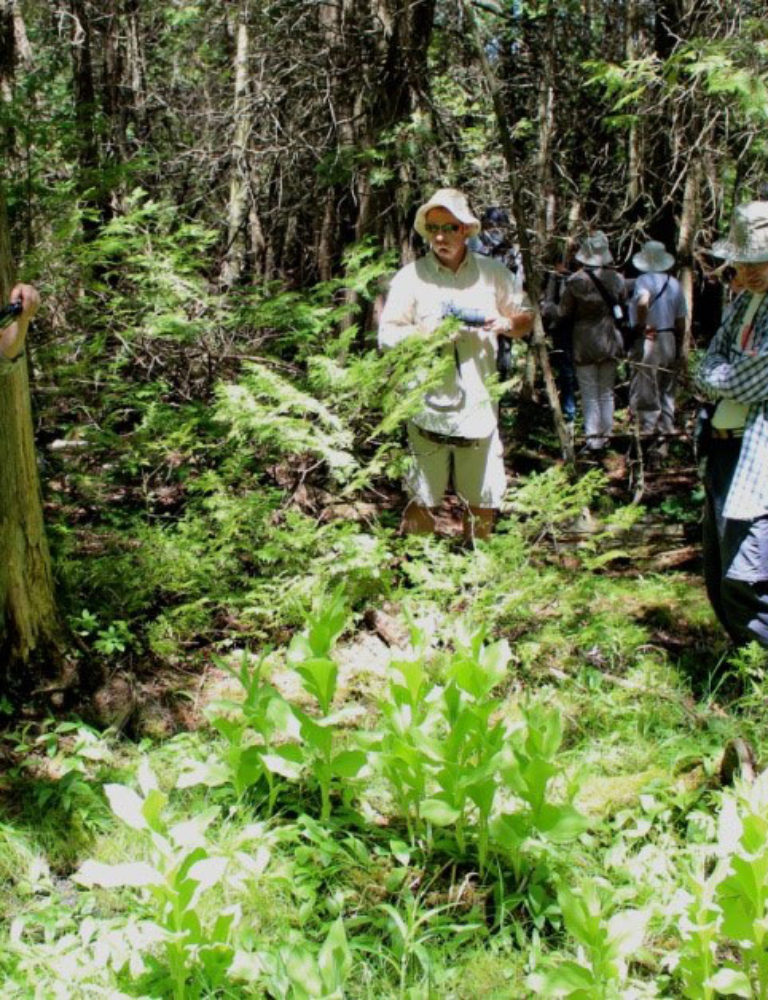 Orchid enthusiasts on discovery walk